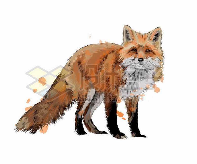 红狐狸之野生动物手绘插画9992663矢量图片免抠素材