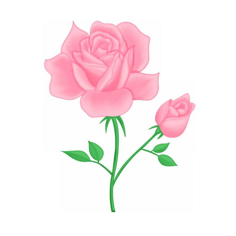 盛开的两朵粉红色蔷薇花玫瑰花3370904图片素材 生物自然-第1张