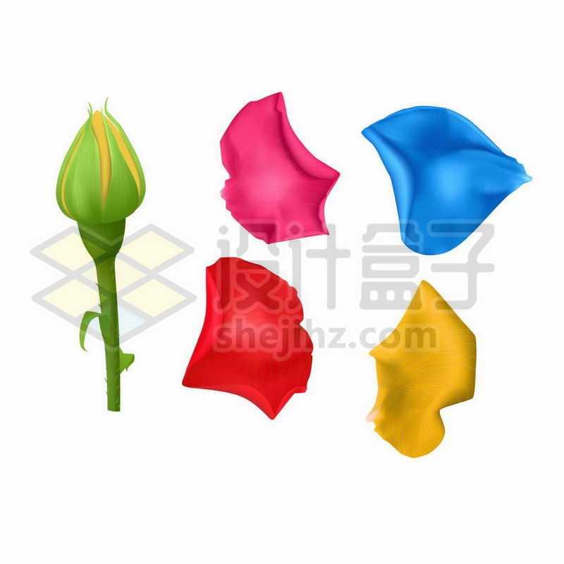 含苞待放的月季花花骨朵和彩色花瓣4729643矢量图片免抠素材