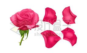 花瓣图片素材