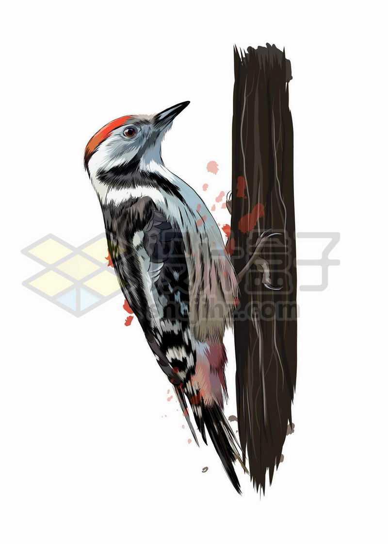 啄木鸟之野生动物手绘插画6350413矢量图片免抠素材