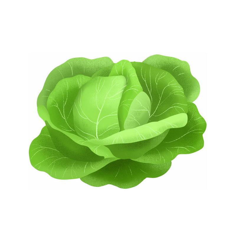 一颗包菜甘蓝椰菜卷心菜美味蔬菜9573740免抠图片素材 生活素材-第1张