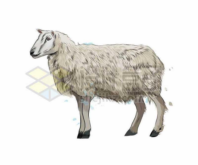 绵羊之动物手绘插画1973530矢量图片免抠素材