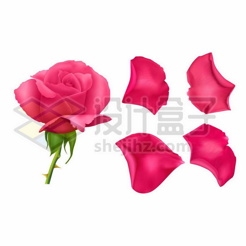 红色的月季花花朵和花瓣7877437矢量图片免抠素材 生物自然-第1张
