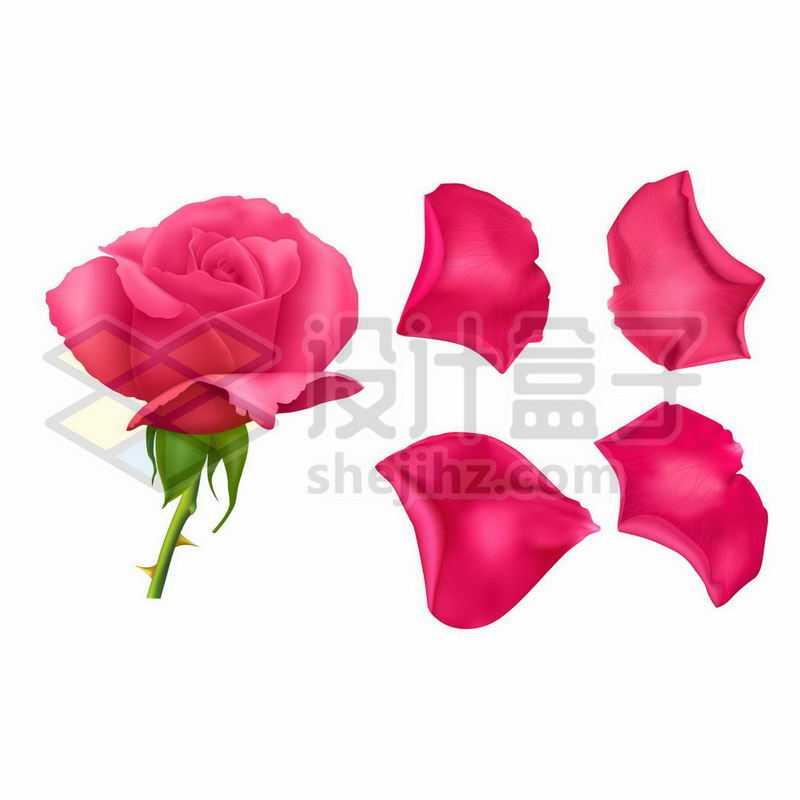红色的月季花花朵和花瓣7877437矢量图片免抠素材