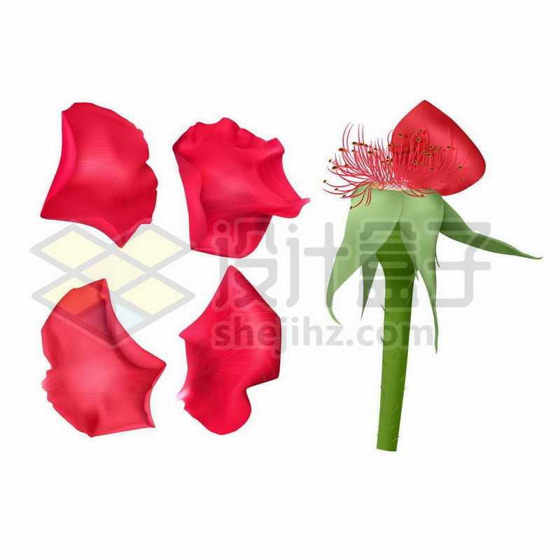 红色的月季花花朵和花瓣3195066矢量图片免抠素材