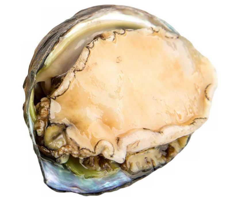 一个高清鲍鱼海鲜美味美食2814475png图片免抠素材