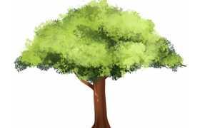 一棵郁郁葱葱的绿色大树手绘插画9380640免抠图片素材