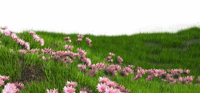 漫山遍野的大草原草地和野花风景图3733948png图片免抠素材
