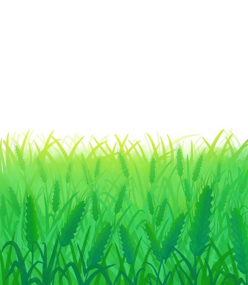 绿色的小麦田地青麦1710291png免抠图片素材