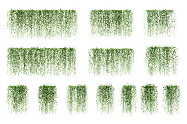 13款茑萝藤蔓植物园林绿植观赏植物4616825免抠图片素材