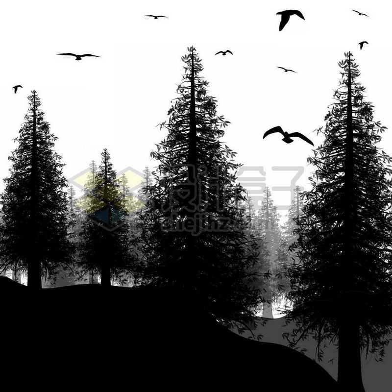 茂密的森林树林和飞鸟剪影8919332免抠图片素材