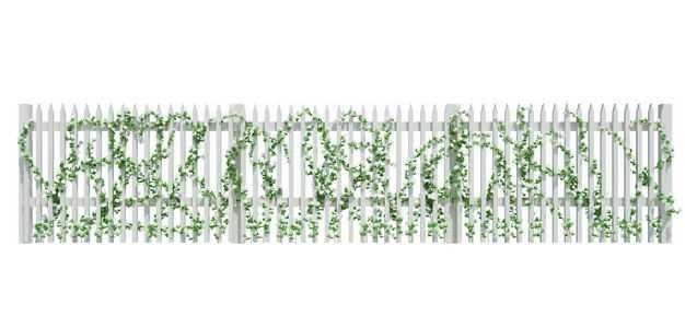 爬满爬山虎绿色藤蔓植物的白色木制栅栏围墙1147053免抠图片素材