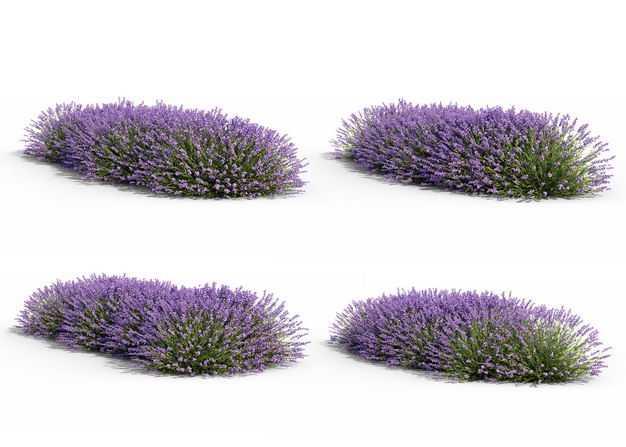 4款紫色薰衣草花丛绿植观赏植物2049058免抠图片素材