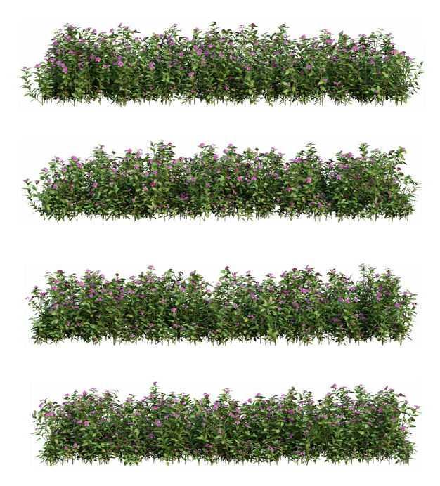 4款萼距花花丛花卉花朵鲜花园林绿植观赏植物花圃园艺植物9823659免抠图片素材