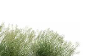 很多草丛野草杂草木贼麻黄9209683免抠图片素材
