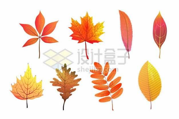 8款金色和红色的枫叶秋天树叶落叶6399233矢量图片免抠素材