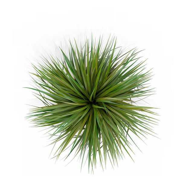 俯视视角的龙舌兰观赏植物园林植物4623665免抠图片素材