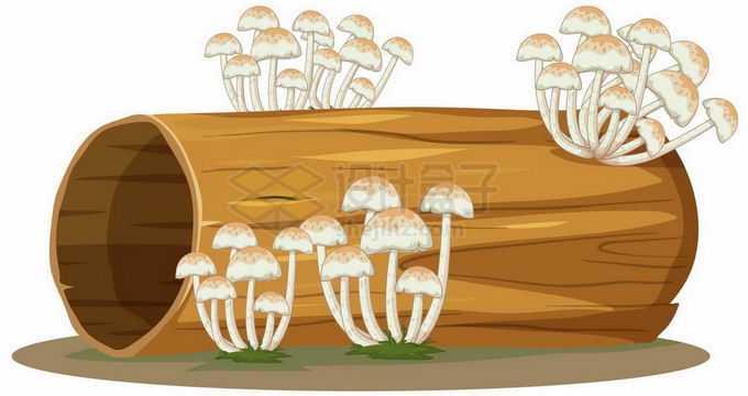 枯树干上长出了蘑菇4133719矢量图片免抠素材