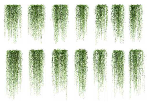 14款紫藤藤蔓植物园林绿植观赏植物4524655免抠图片素材