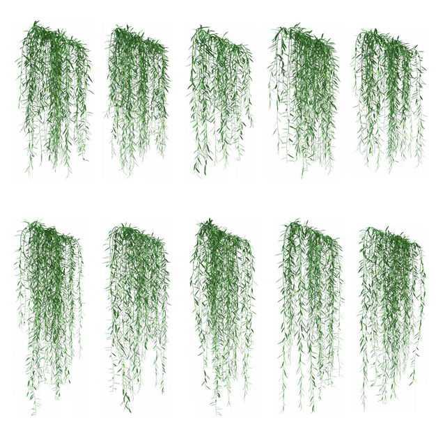 10款垂柳枝条藤蔓植物园林绿植观赏植物5321878免抠图片素材