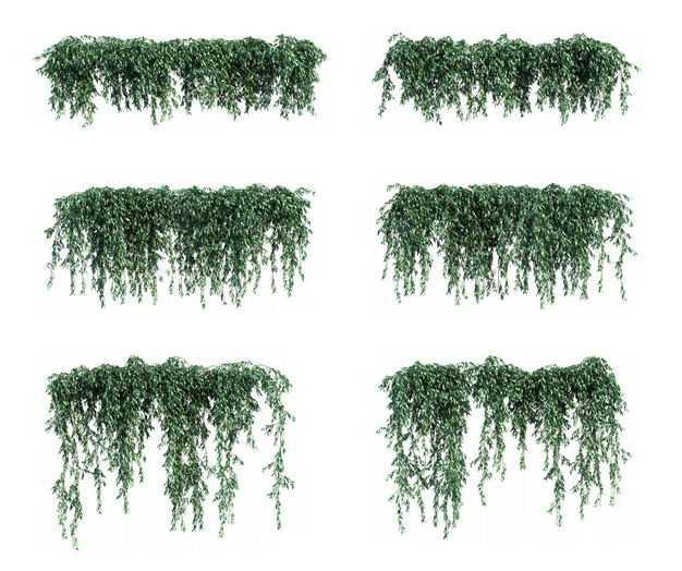 6款鸢萝藤蔓植物园林绿植观赏植物1996093免抠图片素材