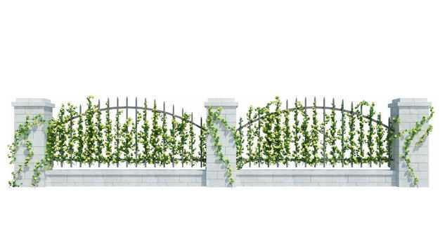 爬满爬山虎绿色藤蔓植物的金属栅栏围墙7696275免抠图片素材