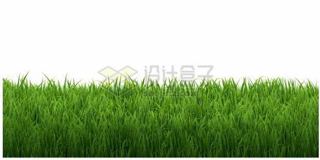绿油油的青草地草坪装饰2522216矢量图片免抠素材