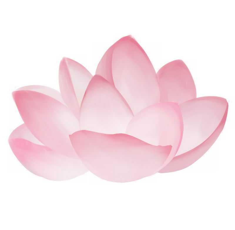 盛开的粉色荷花鲜艳花朵6933186png免抠图片素材