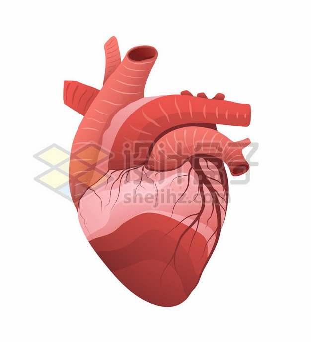 一颗红色的心脏人体器官组织1447049矢量图片免抠素材