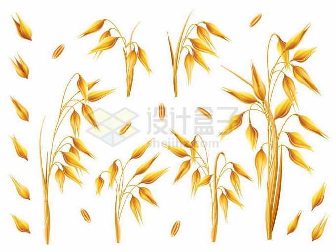 各个品种的大麦燕麦麦粒麦穗粮食作物4561830矢量图片免抠素材