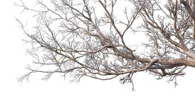冬天下雪后的积雪大树枯树枝2652116免抠图片素材免费下载