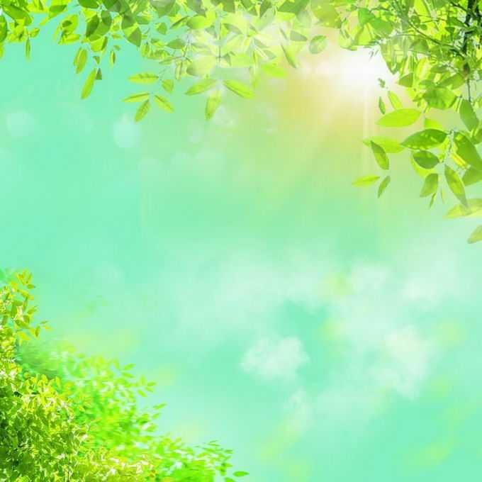 夏天夏日阳光照射下的树冠绿色树叶装饰边框6786146免抠图片素材