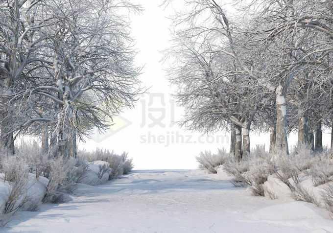 冬天厚厚积雪覆盖的树林森林大树和林间小路道路风景1643625免抠图片素材免费下载