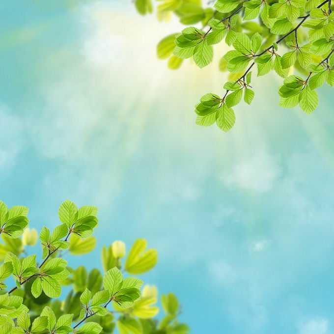 夏天夏日正午阳光照射下的树冠绿色树叶装饰边框4266621免抠图片素材