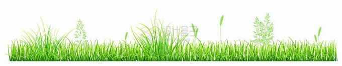 翠绿的青草地上长满了各种杂草野草4350012矢量图片免抠素材免费下载