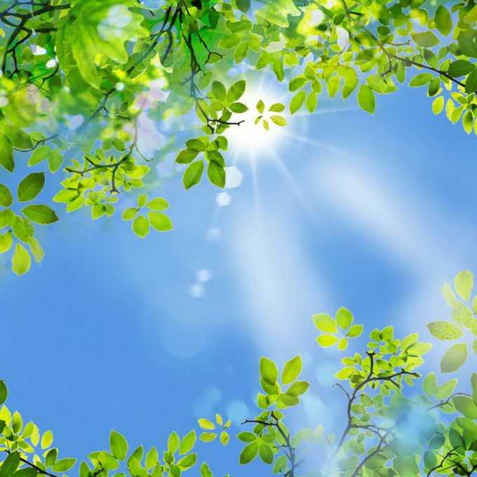 夏天夏日中午阳光照射下的树冠绿色树叶装饰边框4937224免抠图片素材