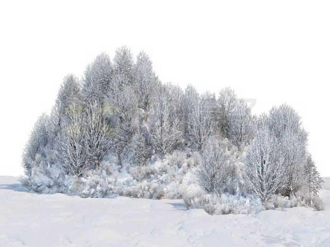 冬天厚厚积雪覆盖的树林森林风景7823039免抠图片素材免费下载