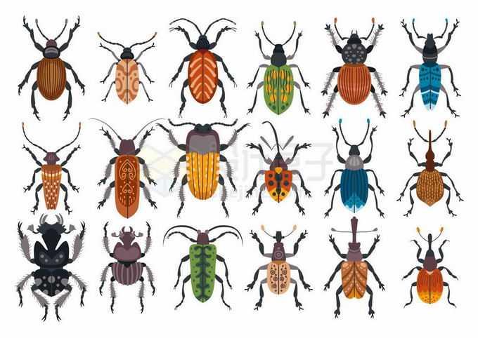 象鼻虫蜣螂虫楸型虫步行虫等各种各样的甲虫昆虫1276310矢量图片免抠素材免费下载