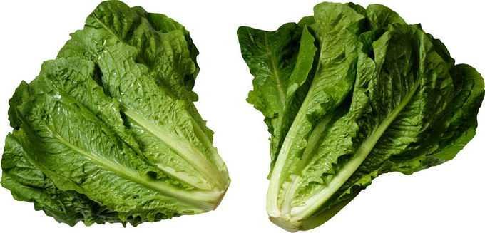 两颗生菜美味蔬菜9128093png免抠图片素材