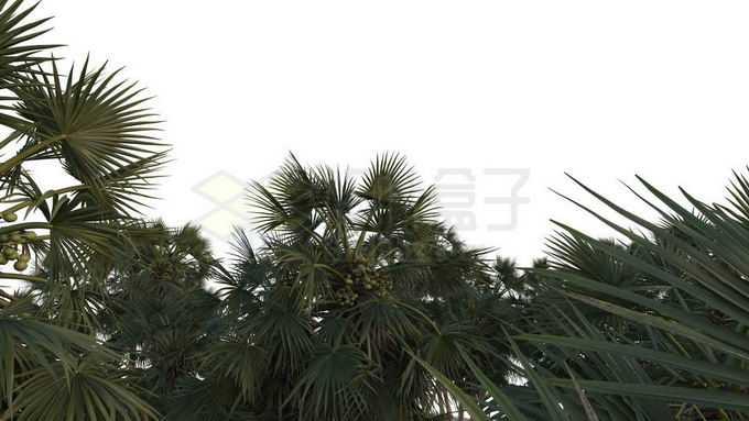 热带树林森林的树冠层9069061免抠图片素材免费下载