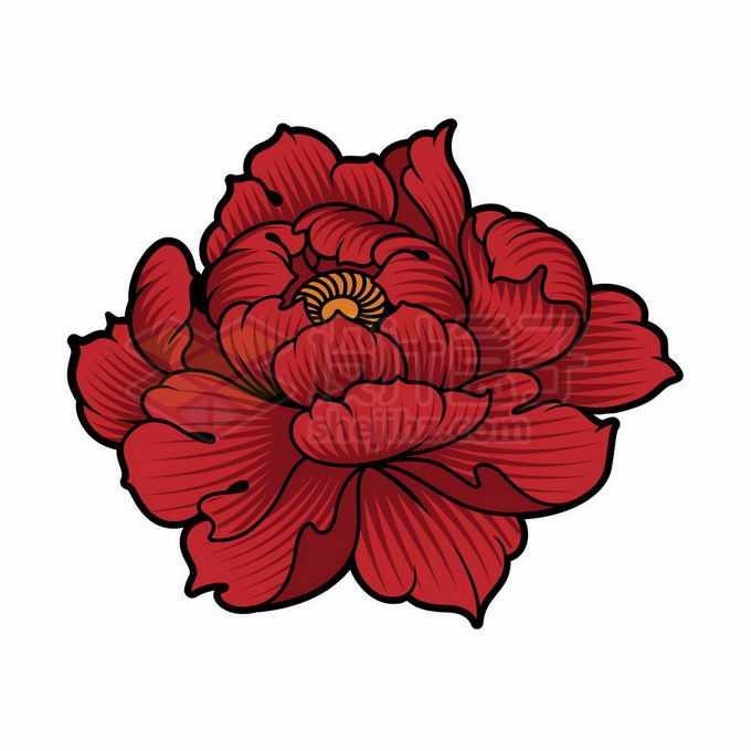 盛开的牡丹花手绘插画6105628矢量图片免抠素材