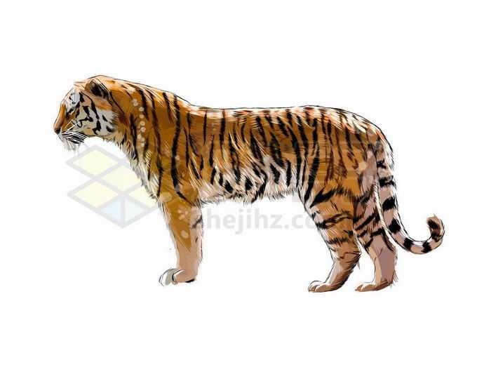 一只站立凝视远方的老虎写实风格水彩插画4331958矢量图片免抠素材免费下载