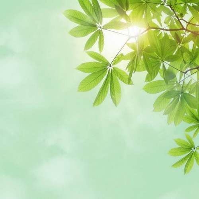 夏天夏日中午阳光照射下的树冠绿色树叶装饰边框5716270免抠图片素材