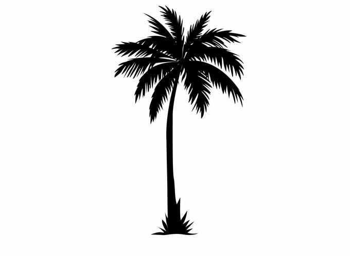 一株椰子树剪影热带大树6459919矢量图片免抠素材免费下载