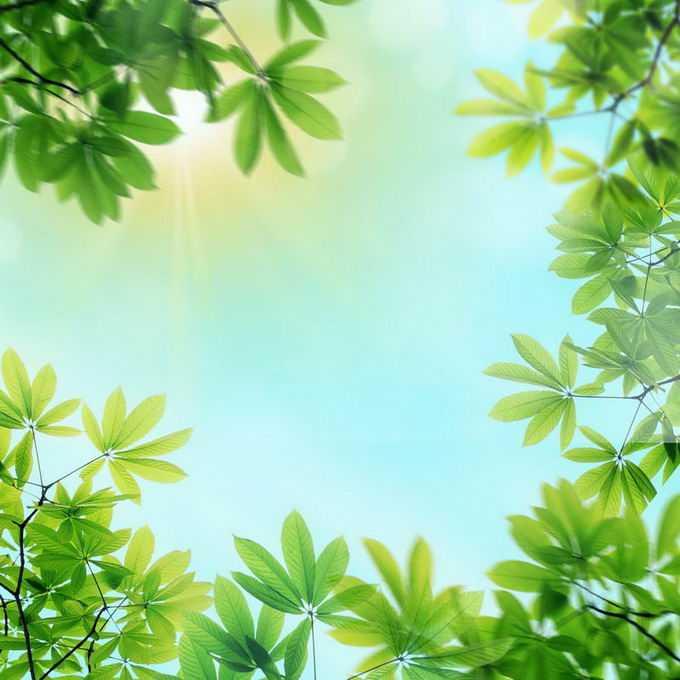 夏天夏日中午阳光照射下的树冠绿色树叶装饰边框3292348免抠图片素材