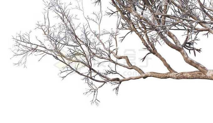 冬天下雪后的积雪大树枯树枝1631626免抠图片素材免费下载