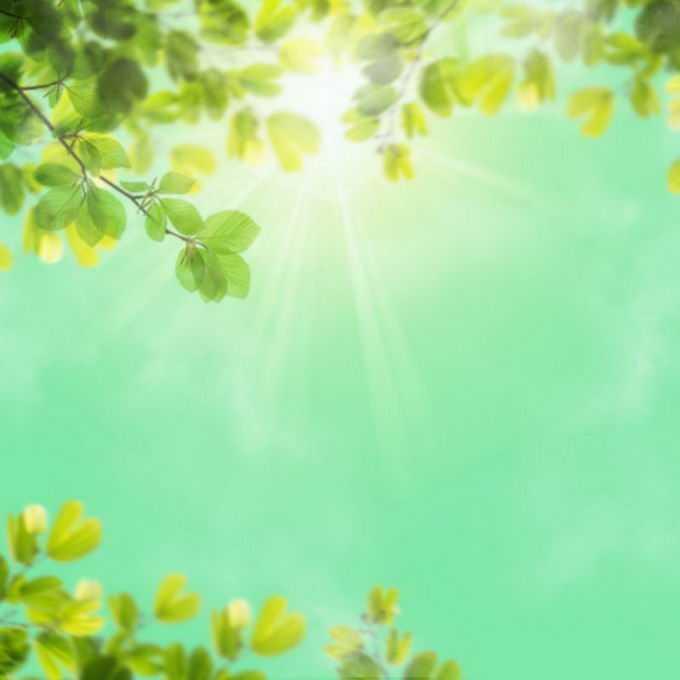 夏天夏日中午强烈阳光照射下的树冠绿色树叶装饰边框1247162免抠图片素材