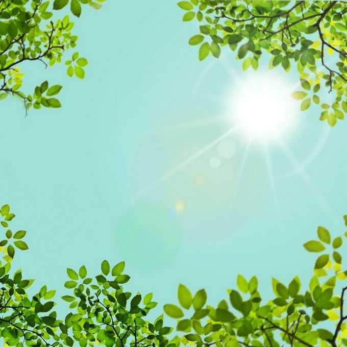 夏天正午阳光照射下的树冠绿色树叶装饰边框2600027免抠图片素材