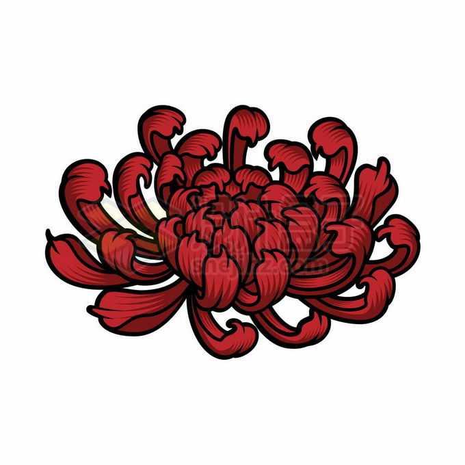 盛开的红色菊花手绘插画3042232矢量图片免抠素材